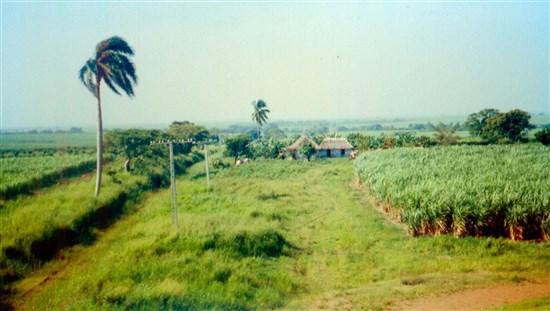 Plantasyon Tarım